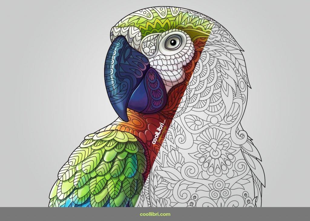 Faire imprimer un livre en couleur